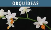 Determinar orquídeas