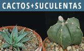 Determinar cactos e outras suculentas