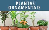 Determine plantas ornamentais