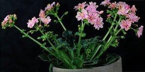 Outras plantas